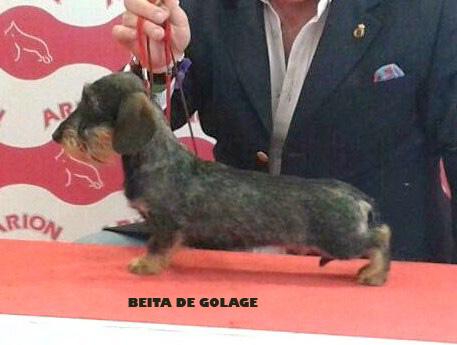 BEITA DE GOLAGE