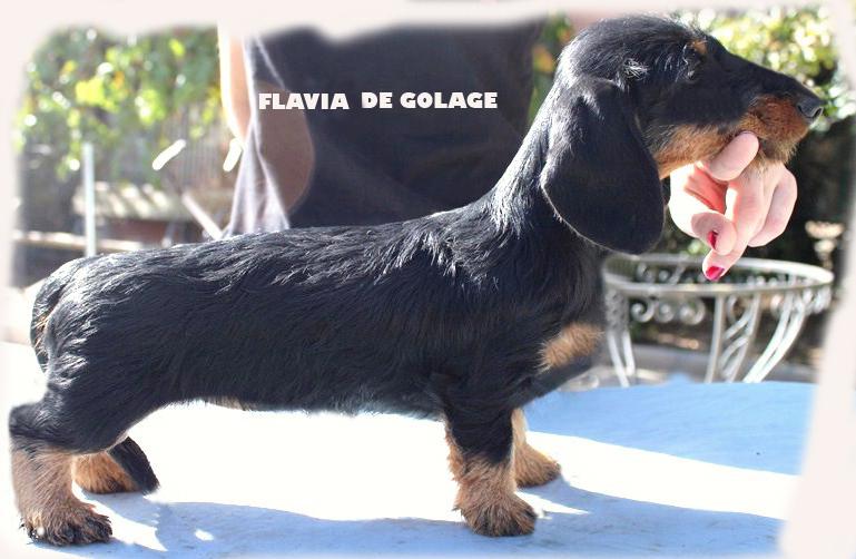 FLAVIA DE GOLAGE copia
