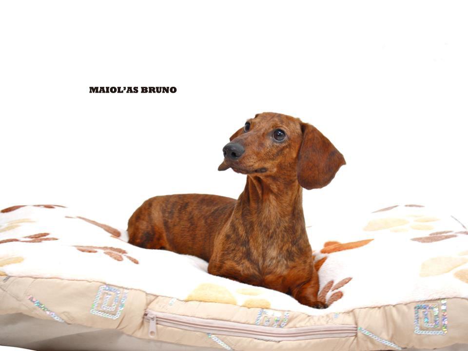 Maiolas Bruno